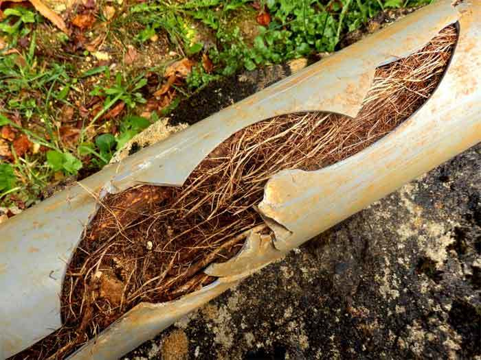 roots-on-sewer-line