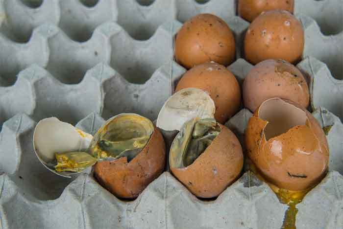 Basement Drain Smells like Rotten Eggs: Causes and Solutions
