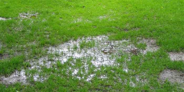 soggy-grass
